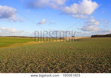 Scenic Farming Landscape