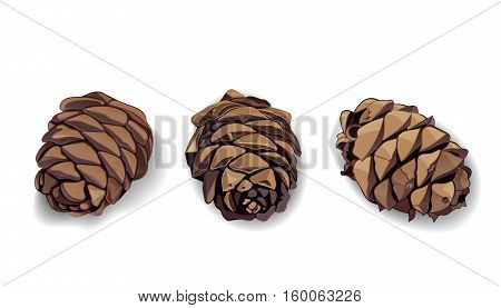 Cones icon set. Pine cones. Fir cones. Realistic vector illustration isolated on white background