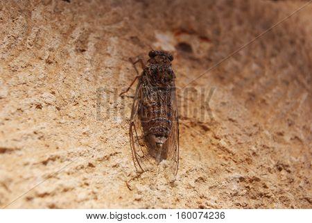 cicada on a tree on a island in Greece