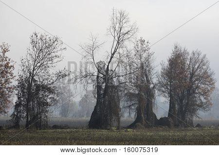 Barren Tree In The Fog