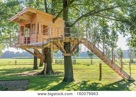 Newly built wooden tree hut in oak trees with pasture