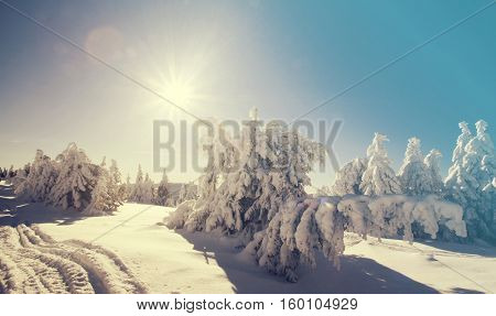 Trees covered with hoarfrost and snow in winter mountains - Retro Christmas snowy background