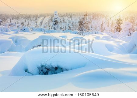 Amazing Arctic winter landscape - sundown, snow covered pine trees and big sparkling snowbanks