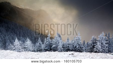 winter wonderland - Christmas background with snowy fir trees at sunrise in Cahlaul massif, Romania