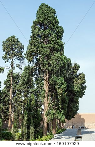 Cypress trees in Historical Fin Garden in Kashan city Iran