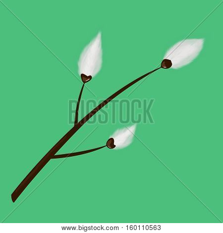 Pussy willow branch on a green background