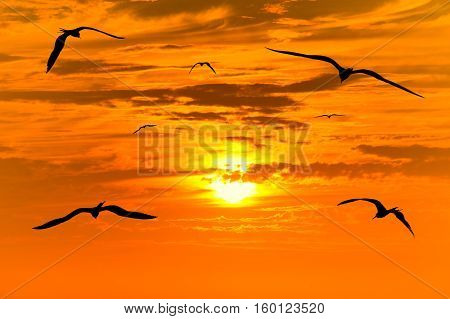 Sunset birds flying silhouettes is flock of birds flying into the colorful surreal sunset with a white hot glowing sun guiding the way.