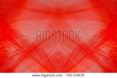 abstract background macro image of red feather