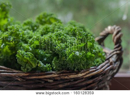 Kale green Cabbage in rustic basket on Windows light Background