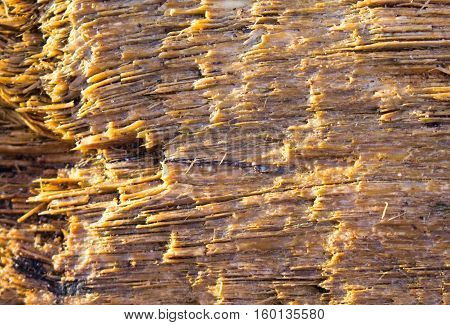 Wood texture with broken ends under sun. Old tree closeup. Timber structure in warm beige and brown. Natural backdrop. Sawmill product. Timber mill tree cut. Timber texture close-up photo. Rough tree