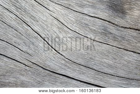 Wood texture closeup photo. White timber board with weathered crack lines. Natural background for shabby chic design. Grey wooden table image. Old tree trunk without bark. Sea wood natural backdrop