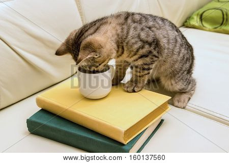 Kitten drinking from the cup on the leather couch. Green and yellow books. Light sofa. Cat playing