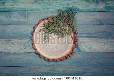 Circle wooden board with leaves of thuja on blue wooden table