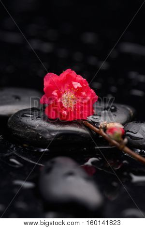 Still life with red cherry with candle and therapy stones