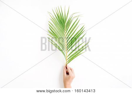 beautiful palm branch in girl's hand isolated on white background. flat lay top view