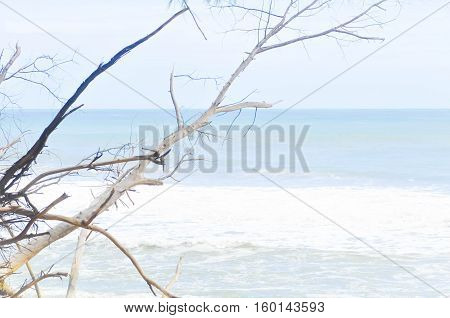 sea , sky and tree background, sea