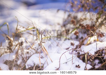 Close view of dried plant's twigs in sunny winter day