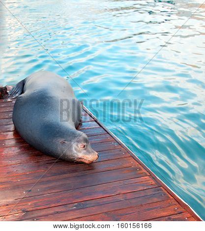 California Sea Lion on boat dock in Cabo San Lucas Baja Mexico BCS