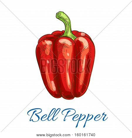 Pepper vegetable icon. Bell pepper vector isolated vegetarian sketch object