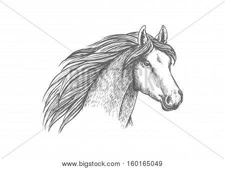 Sketched horse head of purebred arabian mare horse. Equestrian sport, horse racing symbol, t-shirt print design