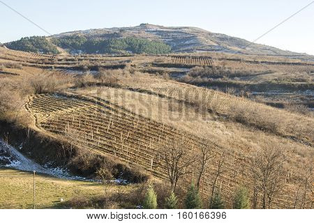 Tikvesh vineyards. Kavadarci, Macedonia.The Tikvesh wine region. The heart of Macedonia wine industry.