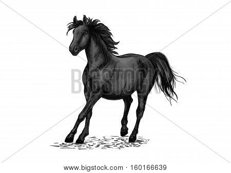 Black beautiful horse racing in gallop gait. Strong raven stallion running in freedom. Vector pencil sketch portrait of racehorse