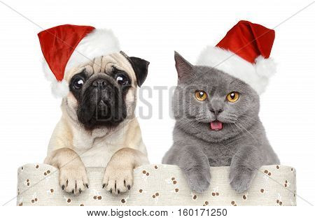 Cat and dog in red Christmas hat on a white background
