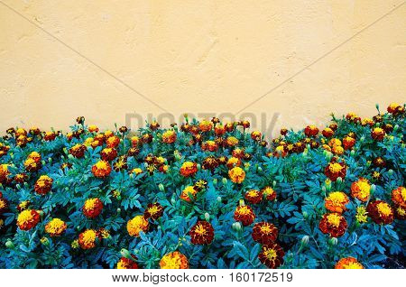 Marigold and orange concrete wall texture and background