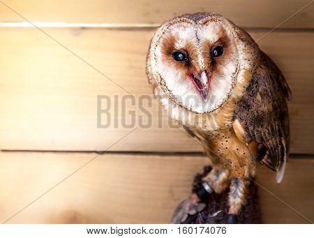 small owl sitting, smal wild bird, zoo