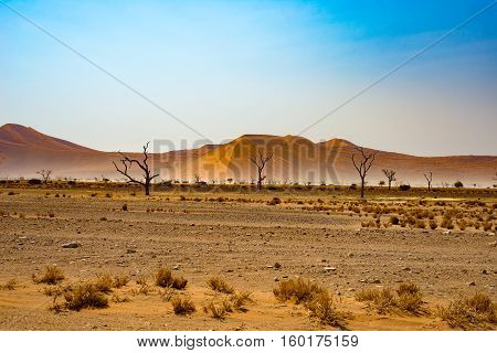 The Namib desert roadtrip in the wonderful Namib Naukluft National Park travel destination in Namibia Africa. Braided Acacia tree and red sand dunes. Morning light mist and fog.