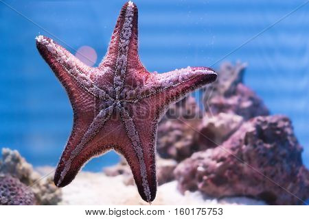 Star Fish in the clear water and blurred background