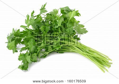 Fresh Parsley Bunch