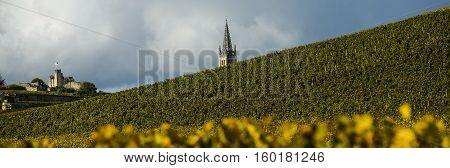 Vineyards Of Saint Emilion, Bordeaux, France
