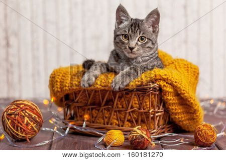 kitten playing with a ball of wool in basket