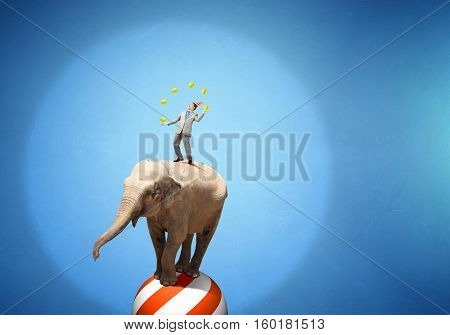 Circus animals performance . Mixed media