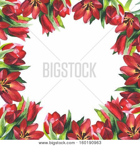 Wildflower tulip flower frame in a watercolor style isolated. Full name of the plant: tulip. Aquarelle wild flower for background, texture, wrapper pattern, frame or border.