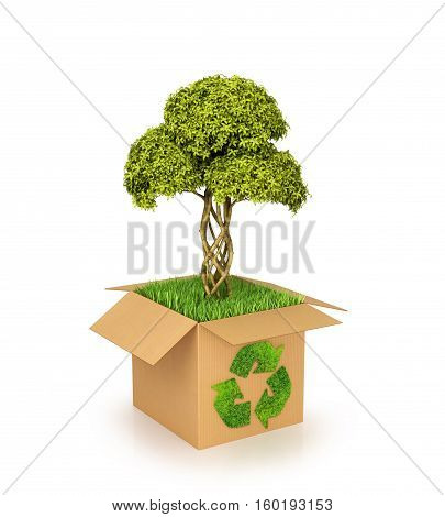 Concept of nature conservation. Cardboard box with Recycle Green. Grass in a box from which the tree grows. 3D illustration