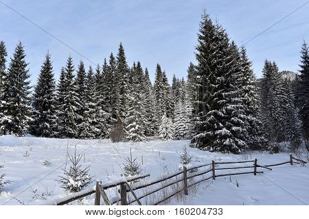 Winter Mountain Forest Landscpae