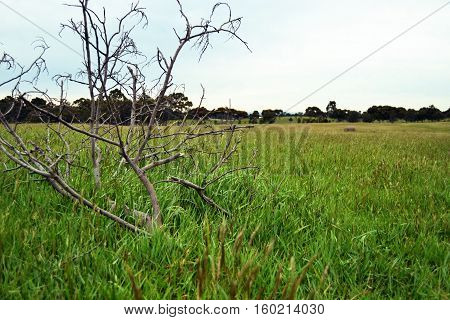 Grassy meadow with dead branch on the ground