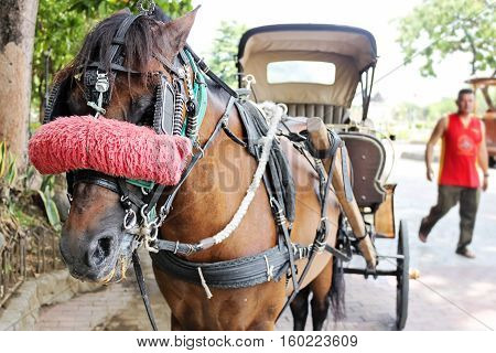 Horse with carriage on the street of Manila Philippines