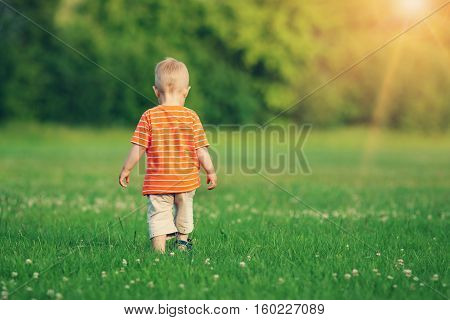 Little boy wolking on the field. Child in the park in summer