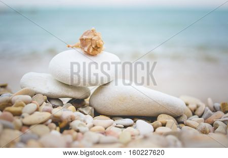 Little seashell lying on the pebble beach of the Adriatic Sea. Stack of rocks with water on the background.