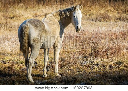 Sunny Autumn Morning And Horse On Pasture
