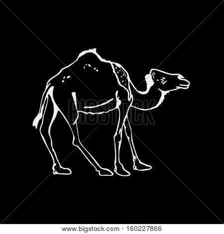 Hand-drawn pencil graphics, camel. Engraving, stencil style. Black and white logo, sign, emblem, symbol. Stamp, seal. Simple illustration. Sketch.