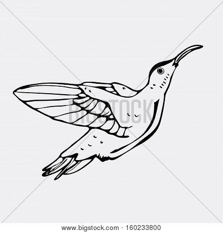 Hand-drawn pencil graphics, colibri bird. Engraving, stencil style. Black and white logo, sign, emblem, symbol. Stamp, seal. Simple illustration. Sketch.