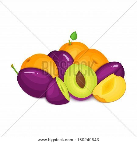 Composition of juicy plums and apricots. Ripe vector apricot and plum fruits whole and slice appetizing looking. Group of tasty fruits for design the packaging of juice, breakfast healthy eating vegan