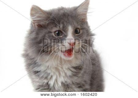 Angry Kitten 2
