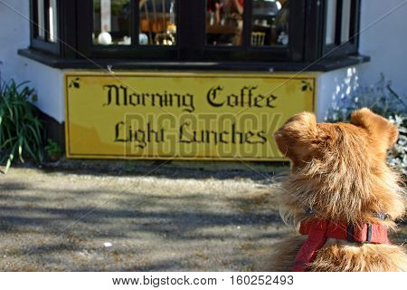 Cute brown Jack Russell cross Yorkshire terrier mongrel dog looking at a light lunches cafe sign.
