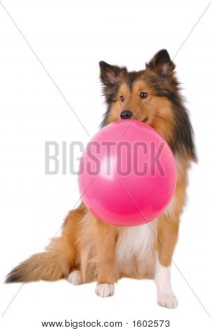 Bubble Gum Dog