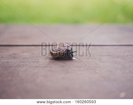 Close up of little snail crawl on the floor of the garden.